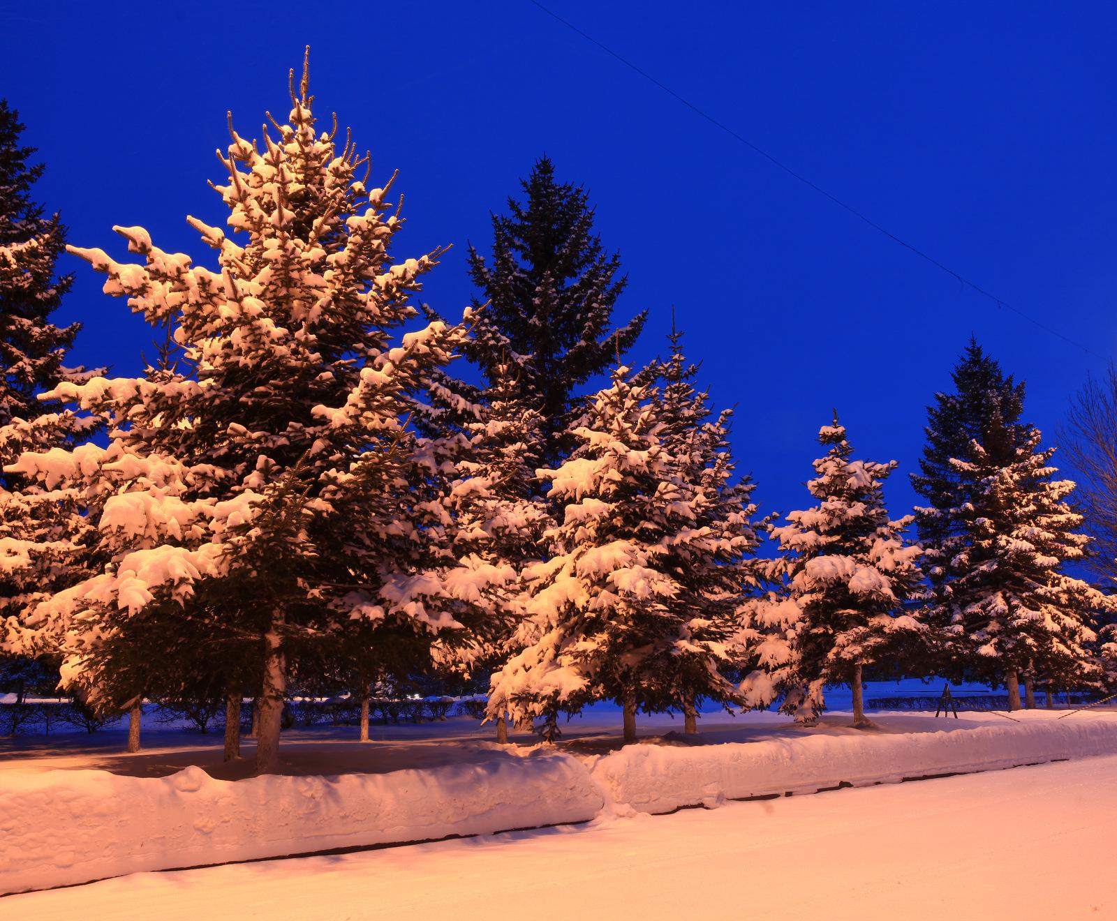 клубе биробиджан фото зимой мероприятия посадке уходу