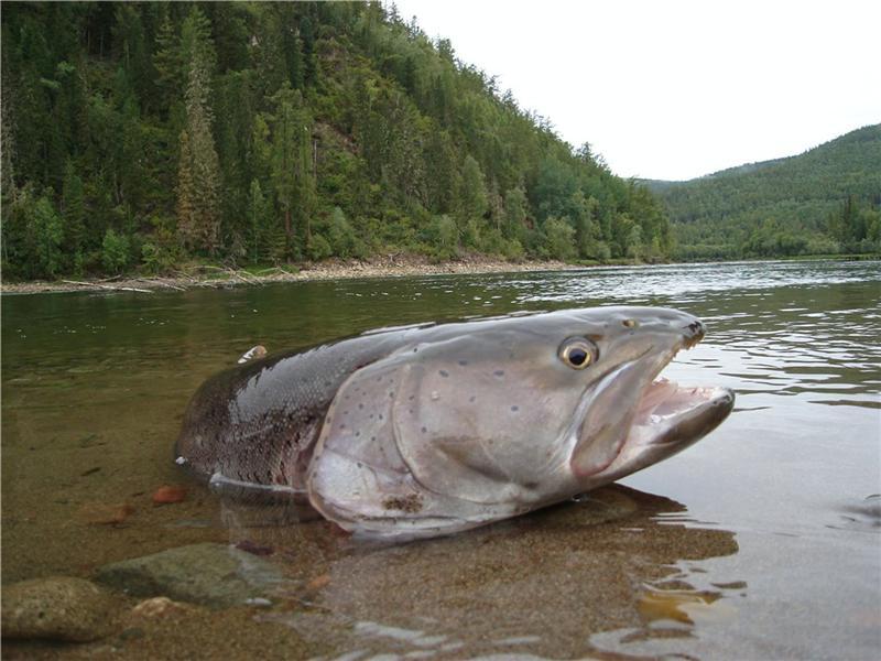 как ловить рыбу на реке енисее