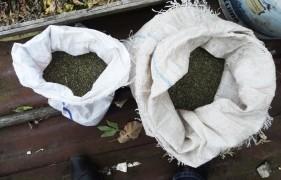 Мешки с марихуаной
