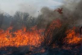Не допустить пожаров в лесу