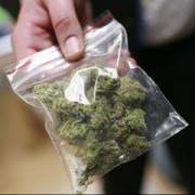 Заготовитель наркотиков осужден на 12 лет