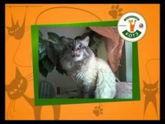 Биробиджанский котэ (четвертая неделя)