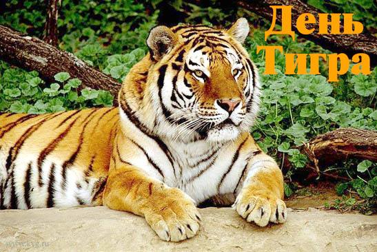 http://riabir.ru/wp-content/uploads/2016/05/den_tigra.jpeg