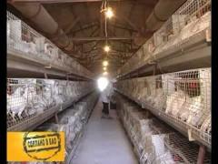 Сделано в ЕАО (Биробиджанская птицефабрика)