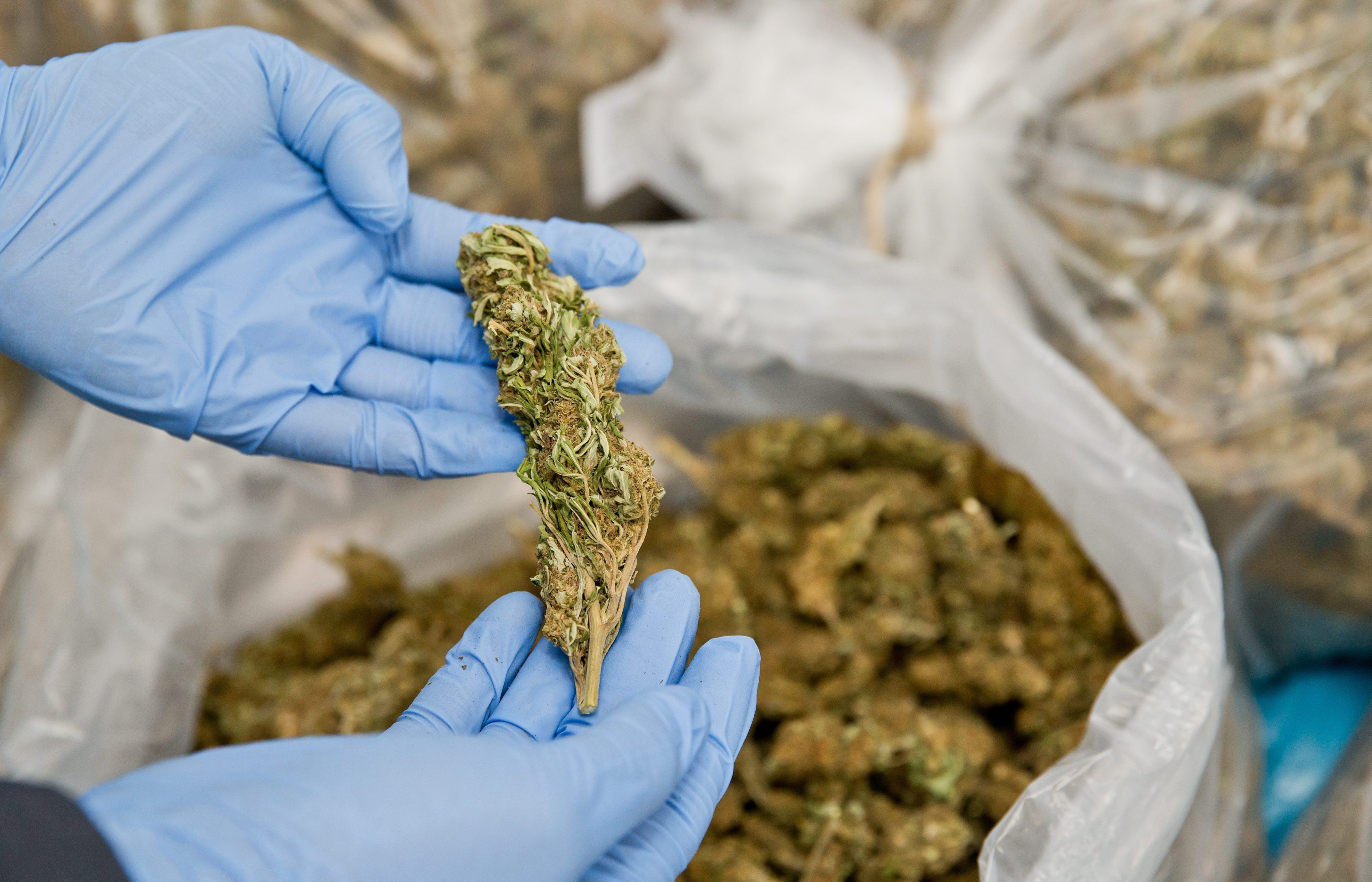 Хранение и перевозка марихуаны любовь и конопля