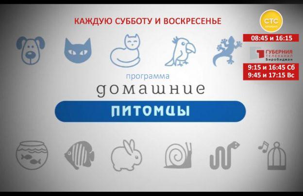 domashnie-pitomtsyi