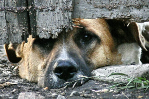 foto-www-sledcom-ru