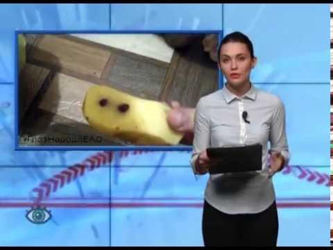 ГлазНародаЕАО: Гнилой картофель по цене золотого, смертельно опасные ледяные пики, орехи-пустышки и другие материалы соавторов