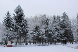 nochnoy-snegopad-prevratil-birobidzhan-v-zimnyuyu-skazku-11