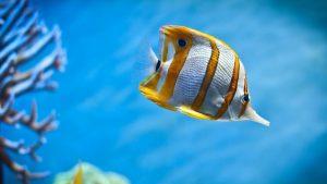 """Как правильно подготовить воду для аквариумных рыб и выбрать фильтр в программе """"Домашний питомец"""""""