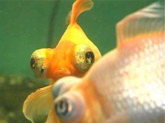 Советы по выбору аквариума и уходу за его обитателями получили зрители программы «Домашние питомцы»