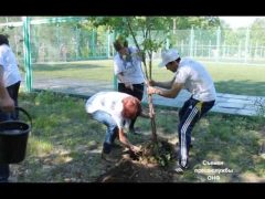 Активисты ОНФ пополнили зеленый фонд Биробиджана