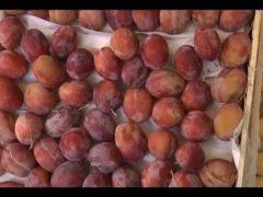 Развалы по торговле сезонными продуктами развернулись в Биробиджане