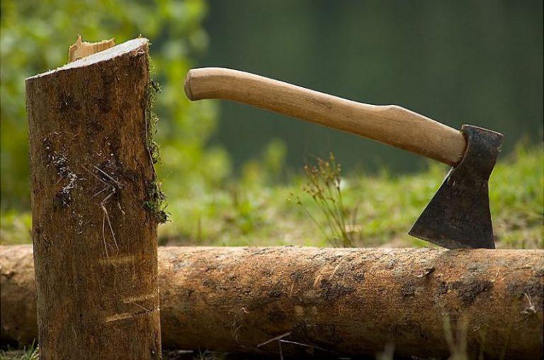 снижает не законная вырубка деревьев в тобольске тому при занятиях