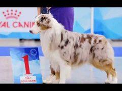 Победителями всероссийской выставки собак стали питомцы биробиджанского хендлера