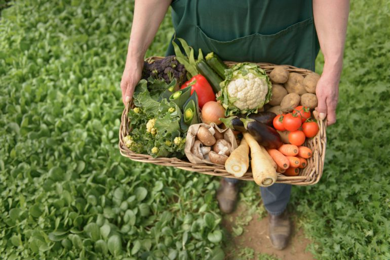 an analysis of organic farming in the united states food industry and agriculture