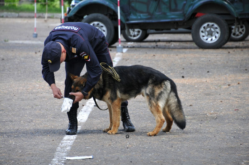 Картинки по запросу Собака и наркотики