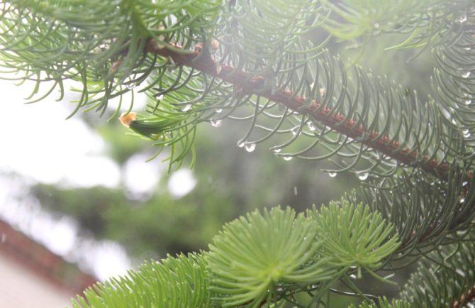 Дождь, грозы, сильный ветер – МЧС предупреждает о непогоде в ЕАО завтра, 18 июля