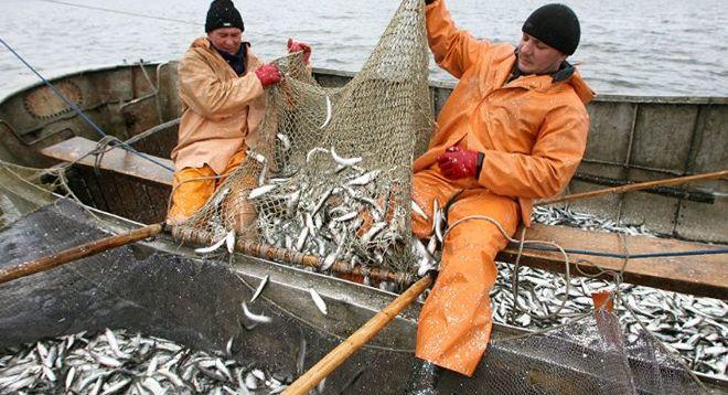 ФАС предложила устроить передел на рынке вылова рыбы