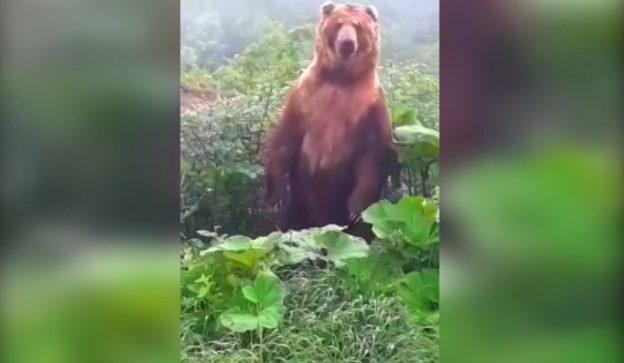Новости про медведя и коноплю статистика употребления марихуаны