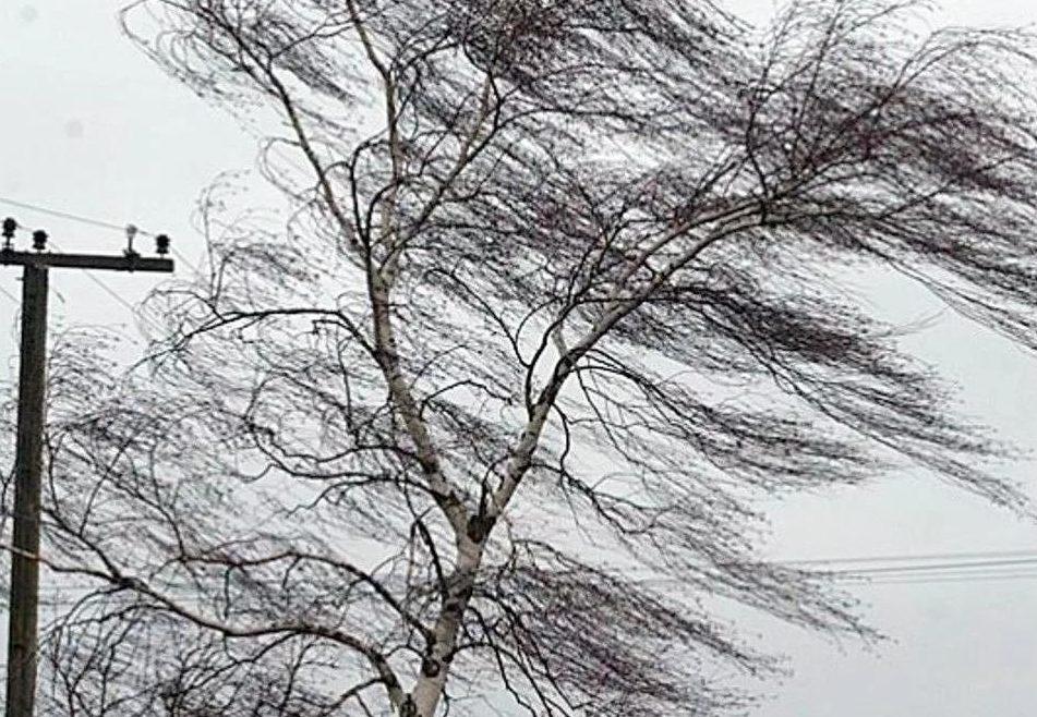 Мощный ветер может обрушиться на ЕАО завтра, 20 апреля