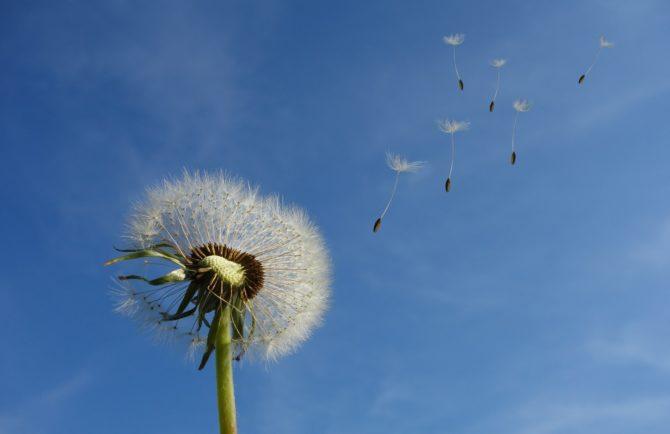 Солнечная погода с сильными порывами ветра ожидает ЕАО – прогноз погоды на 20 апреля
