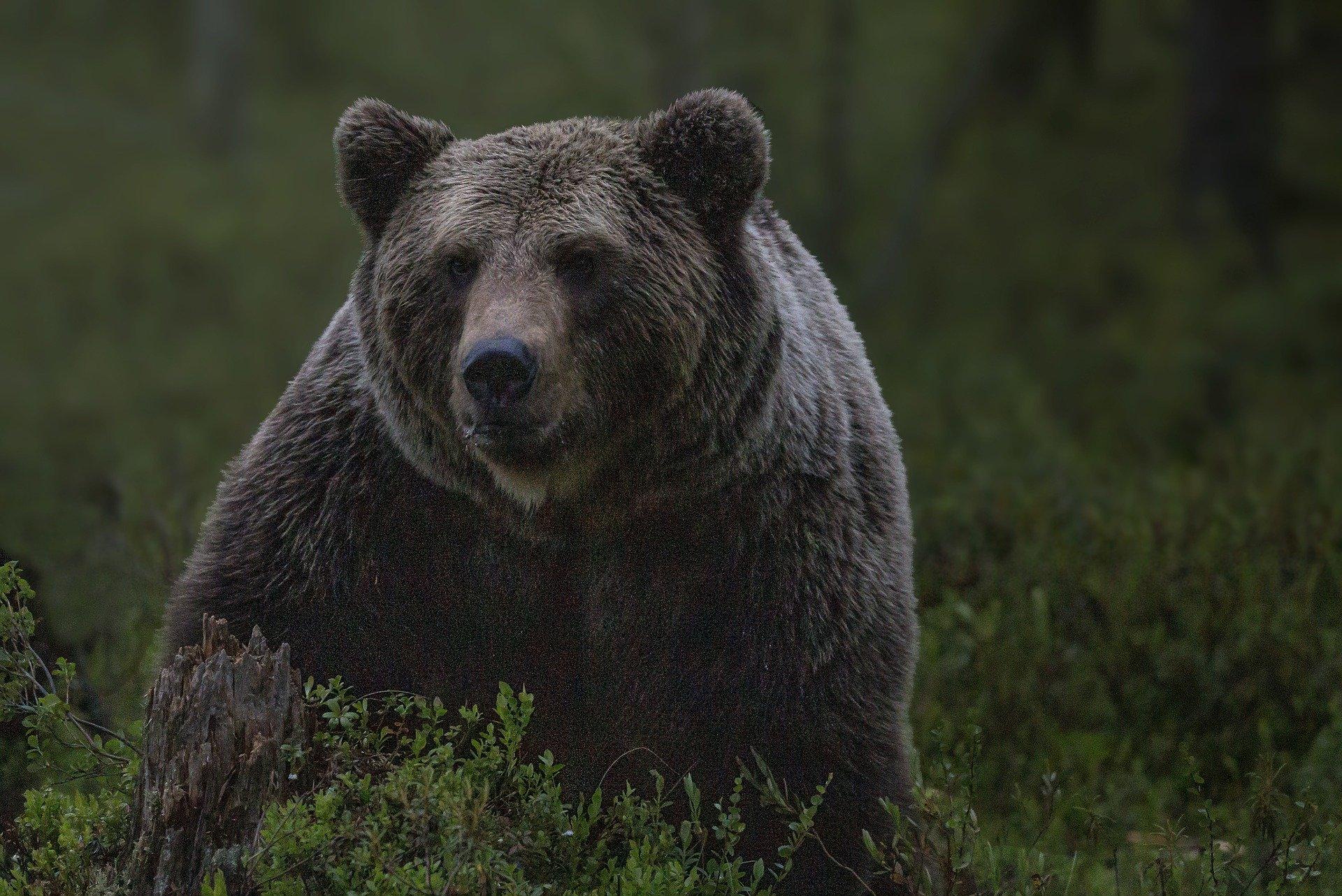 Раненый медведь убил жителя Хабаровского края
